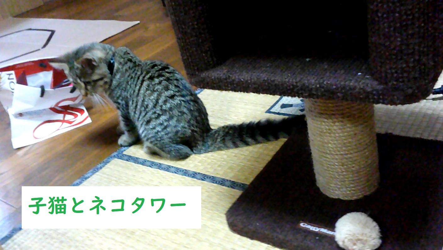 ネコタワーに挑戦 Cat tower challenge